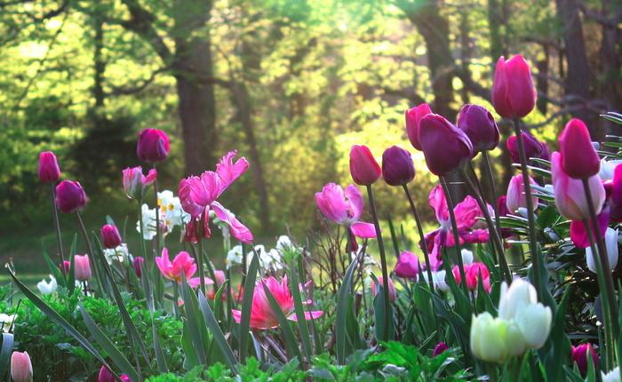 Поляна сад цветы природа картинки на